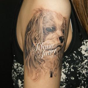 犬のポートレイトタトゥー作品画像